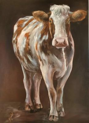 Rood-bonte koe