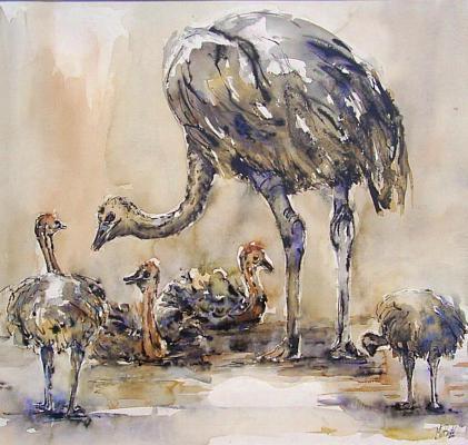 Struisvogel in Aquarel