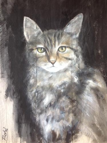 Kat op Steigerhout