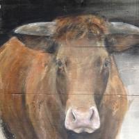 Koe op Steigerhout