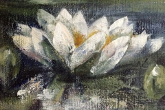 Schilderijen van Waterlelies