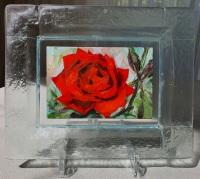 Roos-in-glazen-lijstje-3