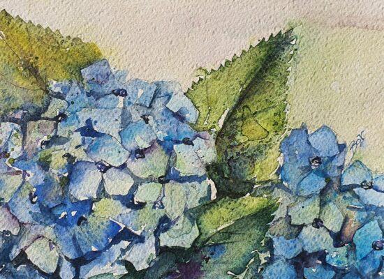 Aquarel-bloemen-hortensia